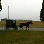 ANDREINI-Amish-150x150